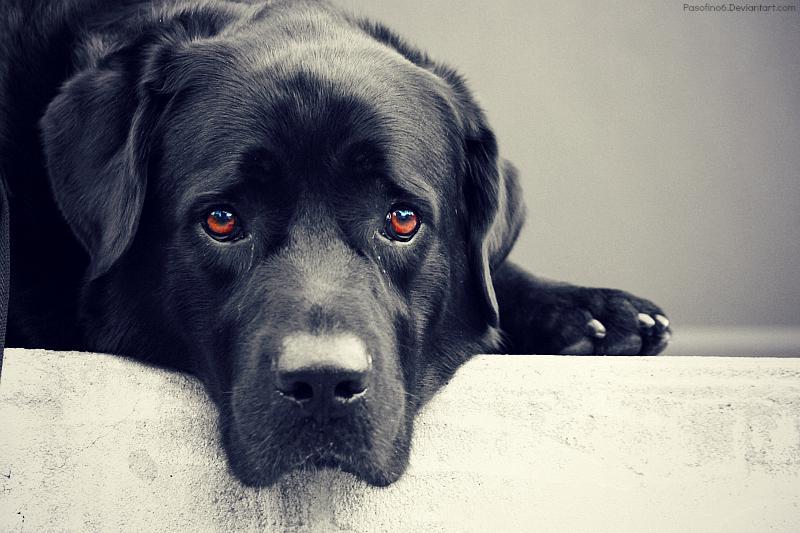 dog, animal