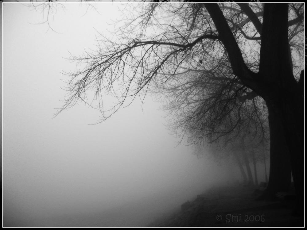 gloomy, trees