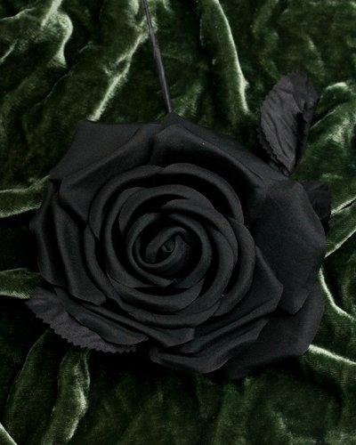 black rose smithstaasister tags black rose tags black rose votes 46 ...