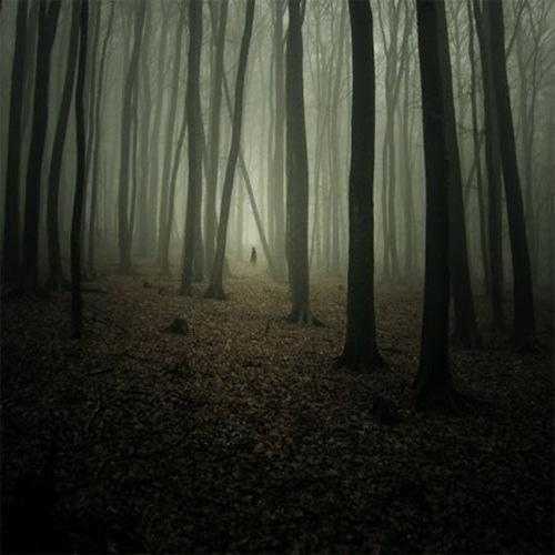 forest, lonely
