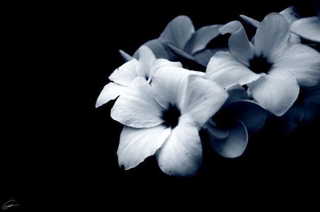 sadness,flower,beauty